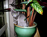 Sooky playing hide and seek in Aurora's pot plant